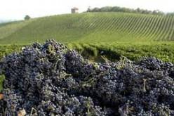 24-25-26 Giugno 2015 Piano Paesaggistico del Vino – Design the Samnium Wine Shire