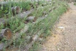 """05/10/15 Seminario: Recupero dei territori """"Fragili"""" con tecniche di Ingegneria Naturalistica"""