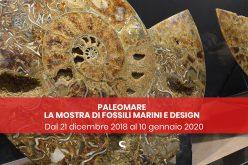 """Mostra """"PaleoMare"""" a Napoli fino al 10 gennaio 2020"""